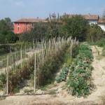 Il  nostro orto